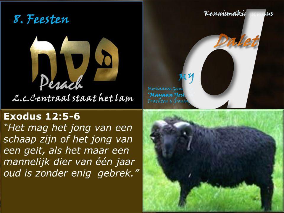 8. Feesten 2.c.Centraal staat het lam Exodus 12:5-6