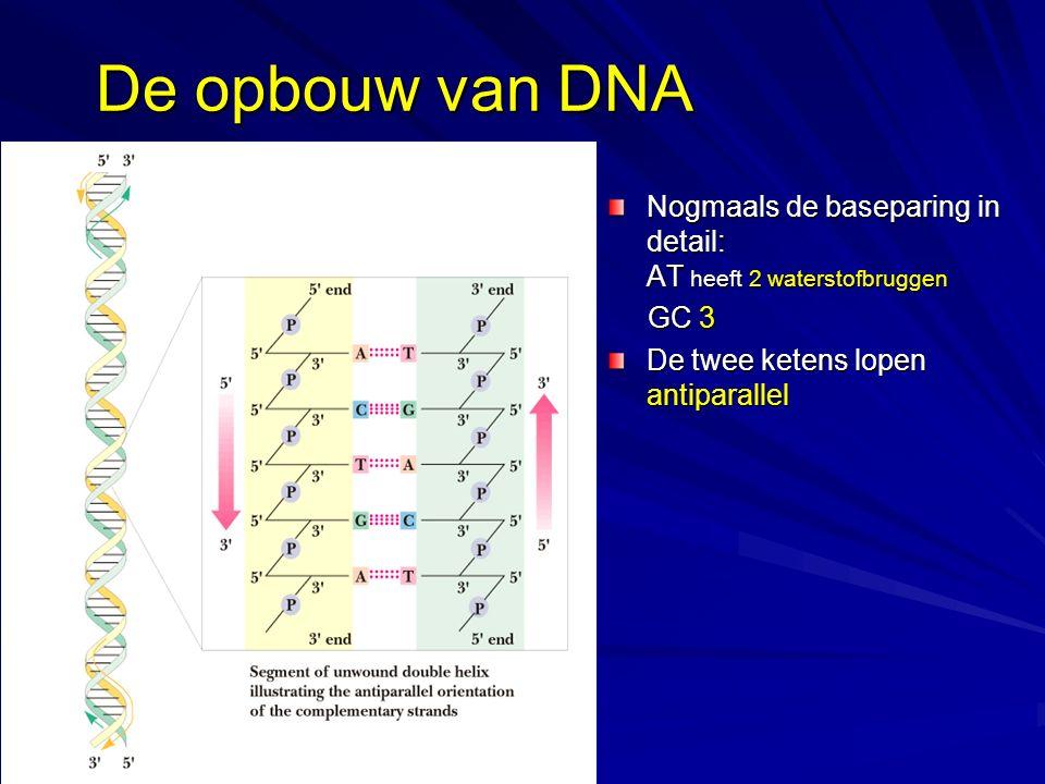 De opbouw van DNA Nogmaals de baseparing in detail: AT heeft 2 waterstofbruggen.