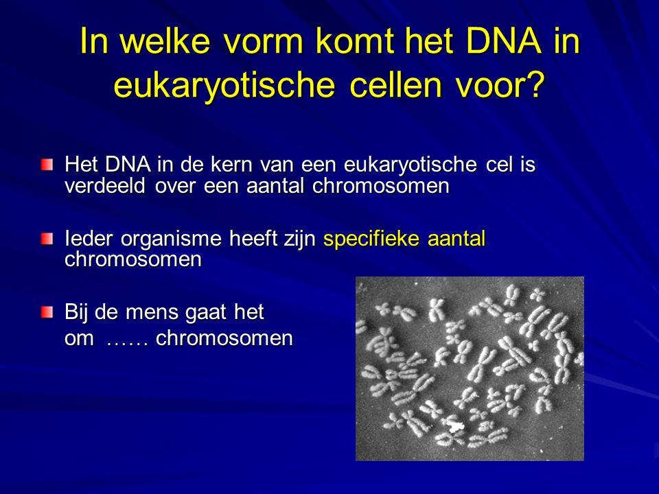 In welke vorm komt het DNA in eukaryotische cellen voor
