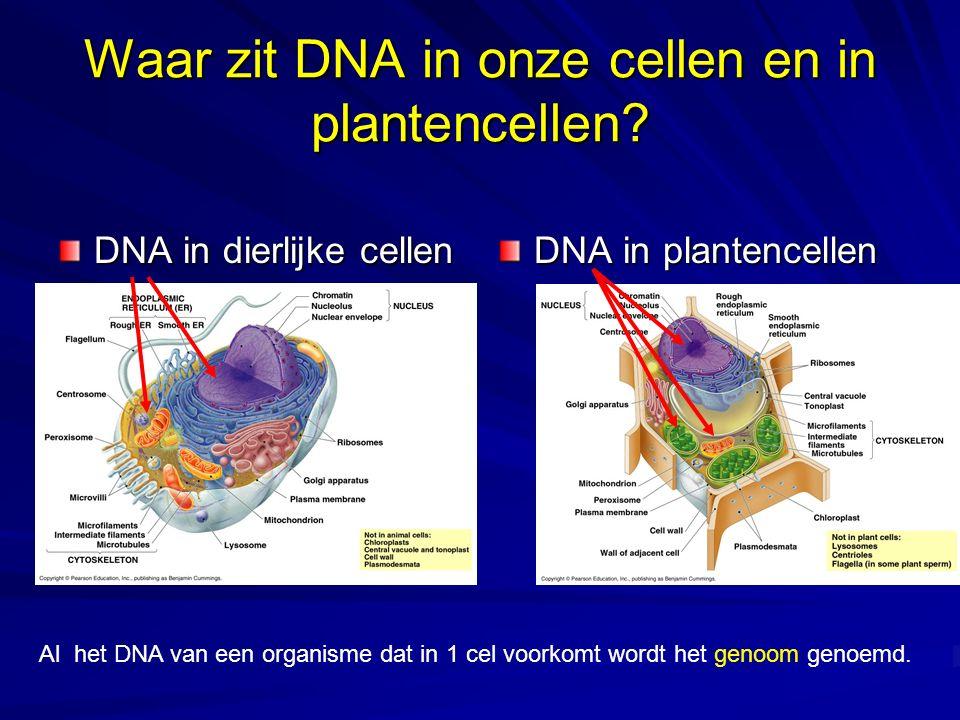 Waar zit DNA in onze cellen en in plantencellen