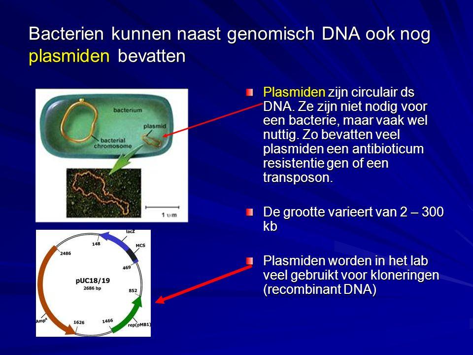 Bacterien kunnen naast genomisch DNA ook nog plasmiden bevatten