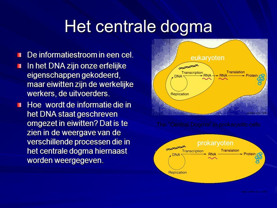 Het centrale dogma De informatiestroom in een cel.