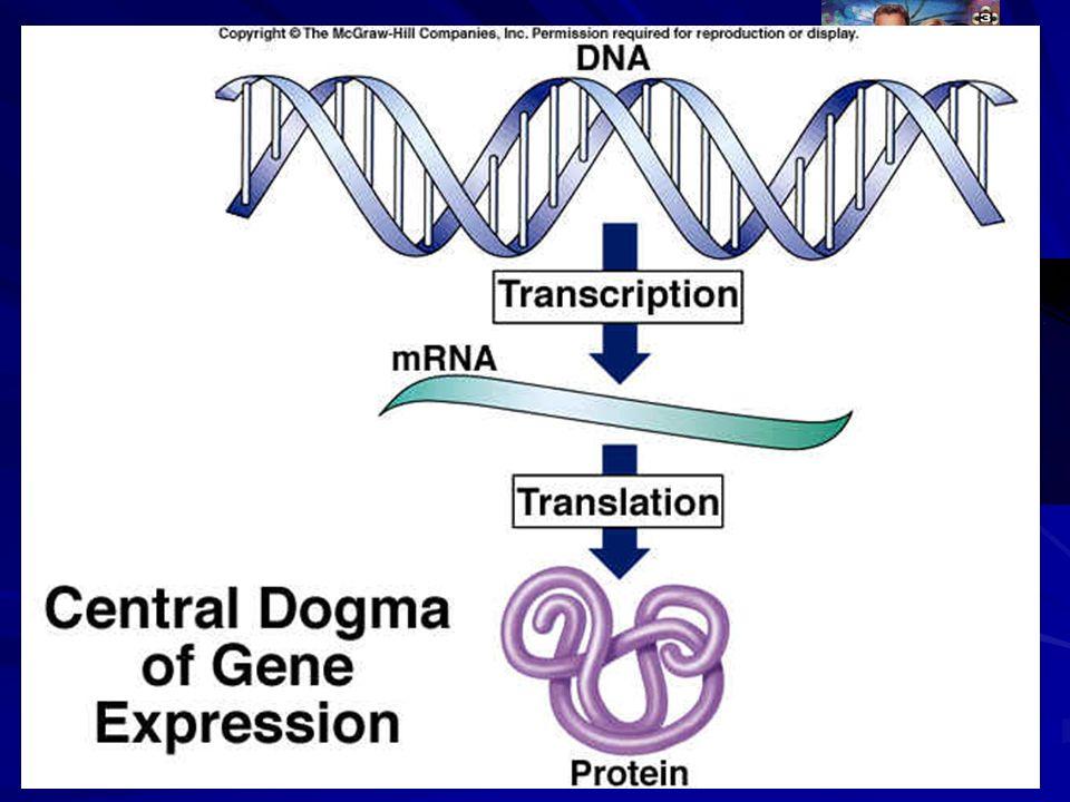 Een aantal vragen Wat is DNA Wat betekent de afkorting DNA