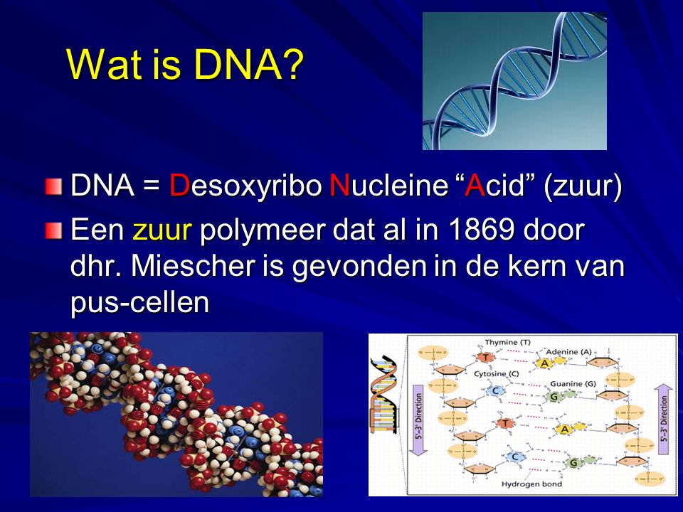 Wat is DNA DNA = Desoxyribo Nucleine Acid (zuur)