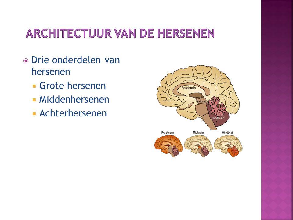 Architectuur van de hersenen