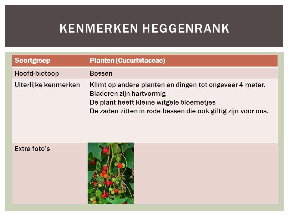 Kenmerken Heggenrank Soortgroep Planten (Cucurbitaceae) Hoofd-biotoop