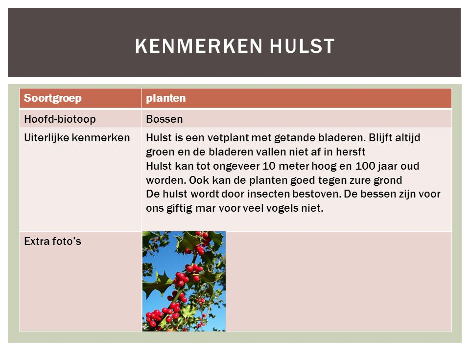 Kenmerken Hulst Soortgroep planten Hoofd-biotoop Bossen