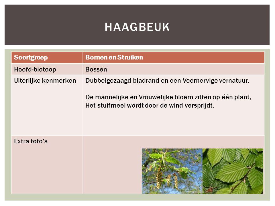 HAAGBEUK Soortgroep Bomen en Struiken Hoofd-biotoop Bossen