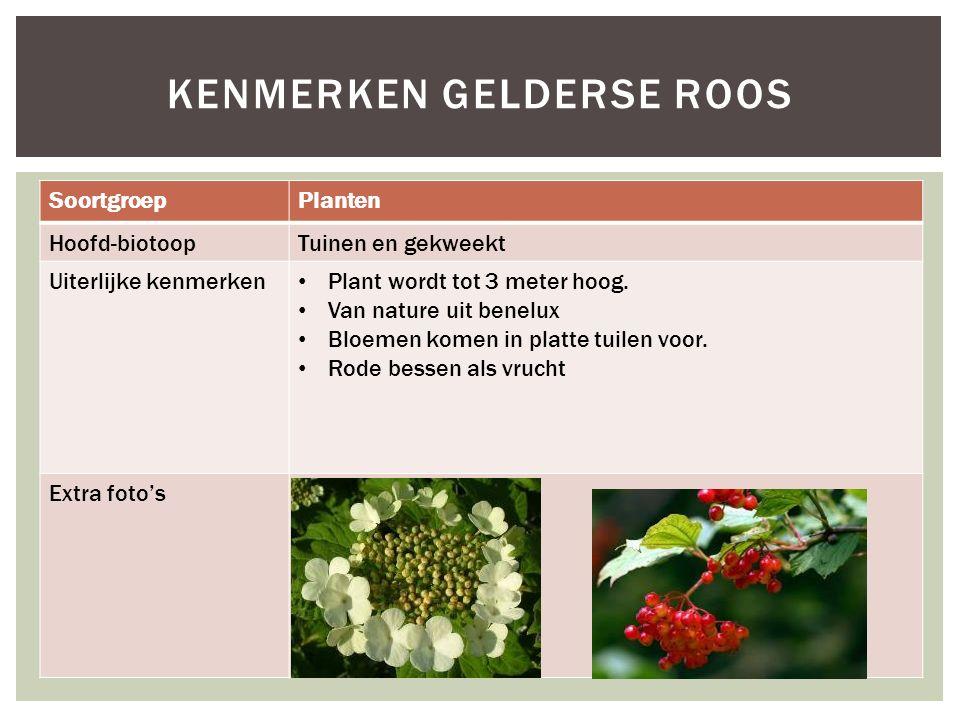 Kenmerken gelderse roos