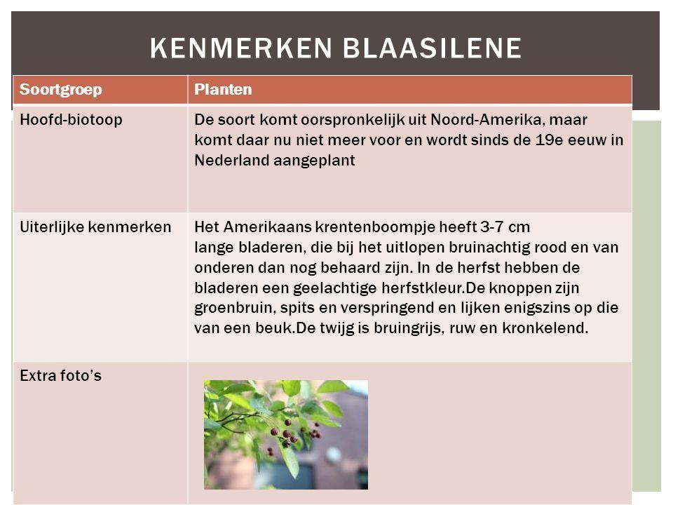 Kenmerken blaasilene Soortgroep Planten Hoofd-biotoop