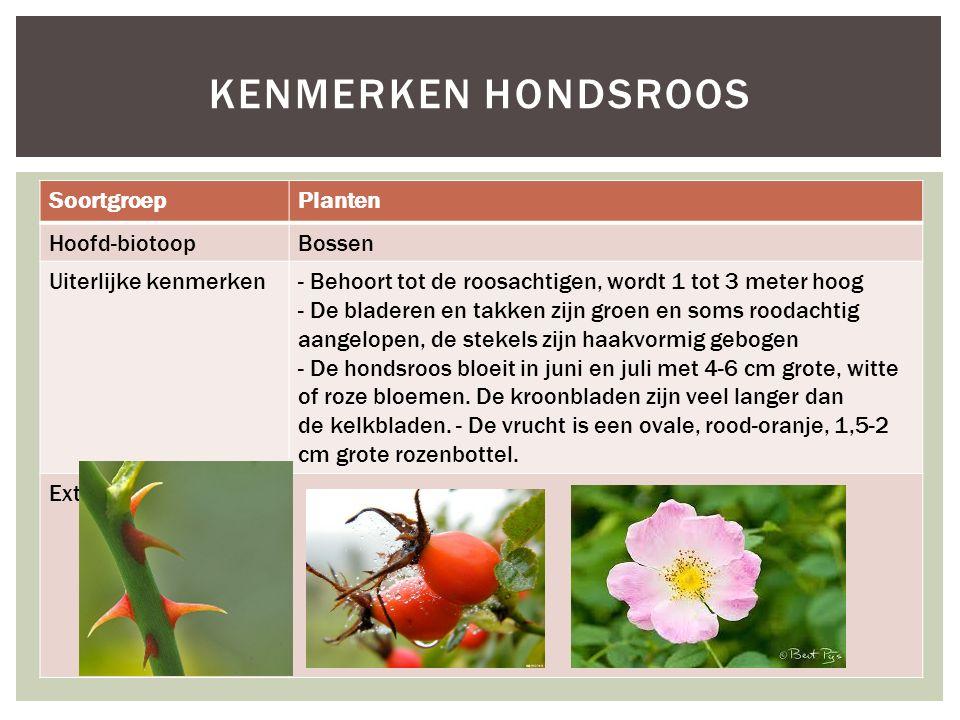 Kenmerken hondsroos Soortgroep Planten Hoofd-biotoop Bossen