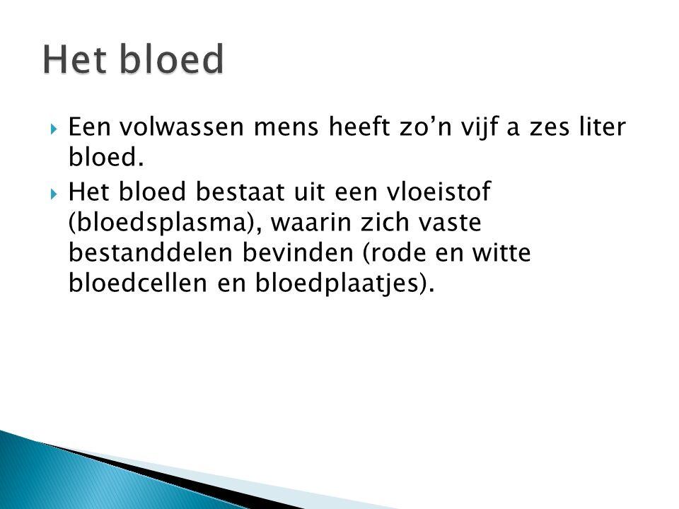 Het bloed Een volwassen mens heeft zo'n vijf a zes liter bloed.