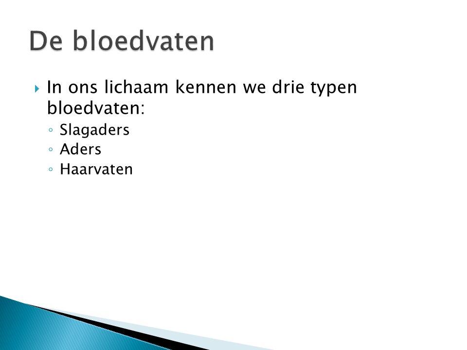 De bloedvaten In ons lichaam kennen we drie typen bloedvaten: