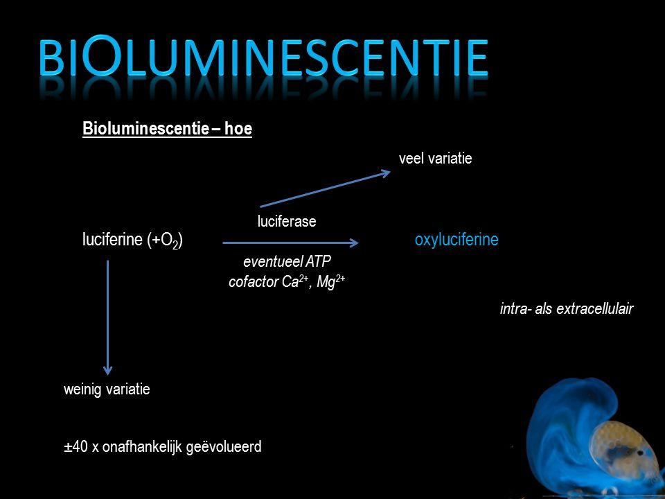 Bioluminescentie Bioluminescentie – hoe luciferine (+O2) oxyluciferine