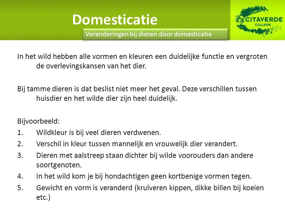 Domesticatie Veranderingen bij dieren door domesticatie.