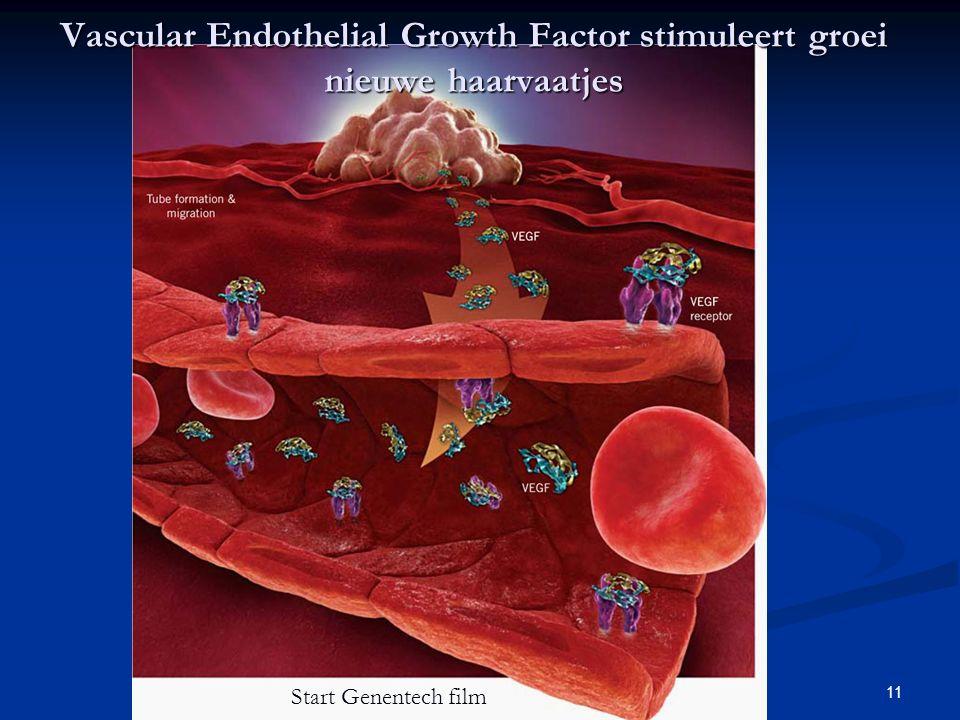 Vascular Endothelial Growth Factor stimuleert groei nieuwe haarvaatjes