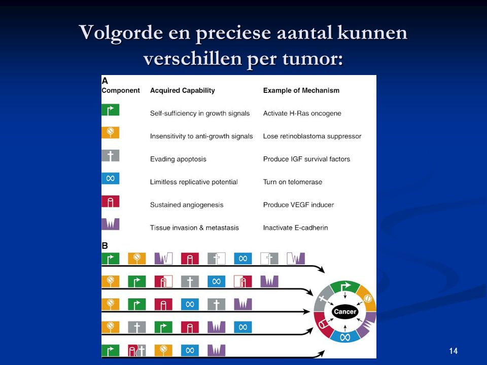 Volgorde en preciese aantal kunnen verschillen per tumor: