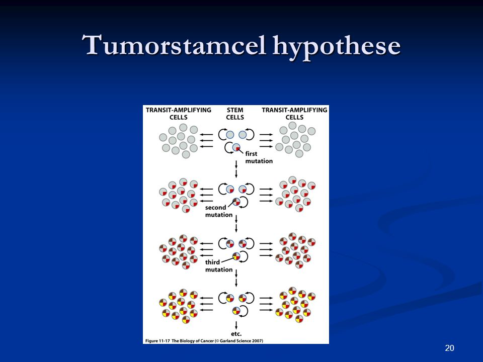 Tumorstamcel hypothese