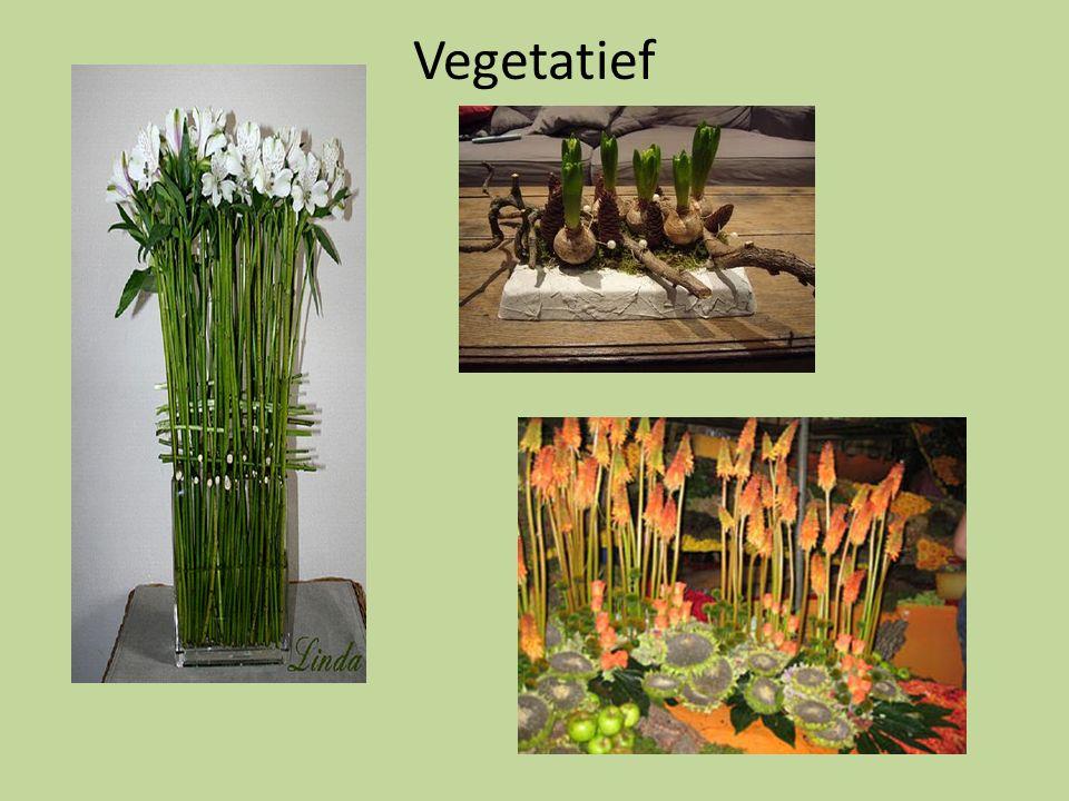 Vegetatief