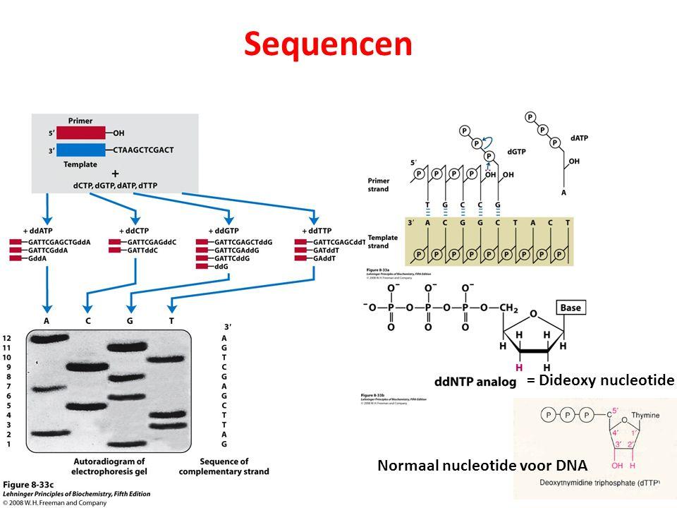 Sequencen = Dideoxy nucleotide Normaal nucleotide voor DNA