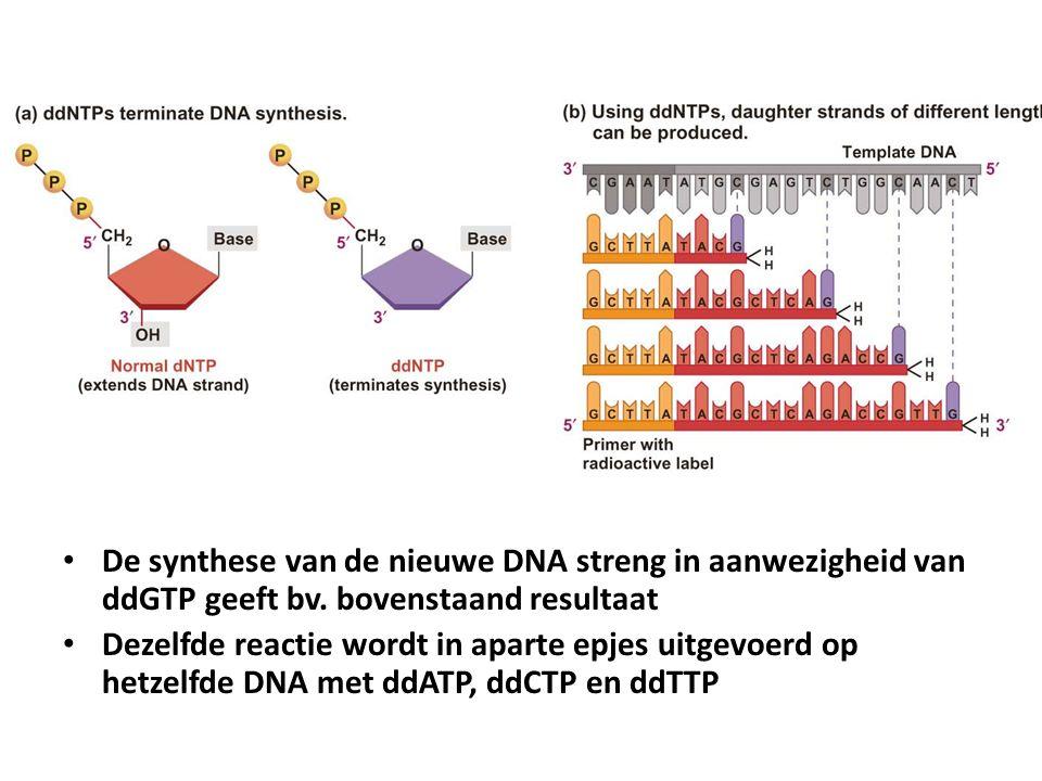 De synthese van de nieuwe DNA streng in aanwezigheid van ddGTP geeft bv. bovenstaand resultaat