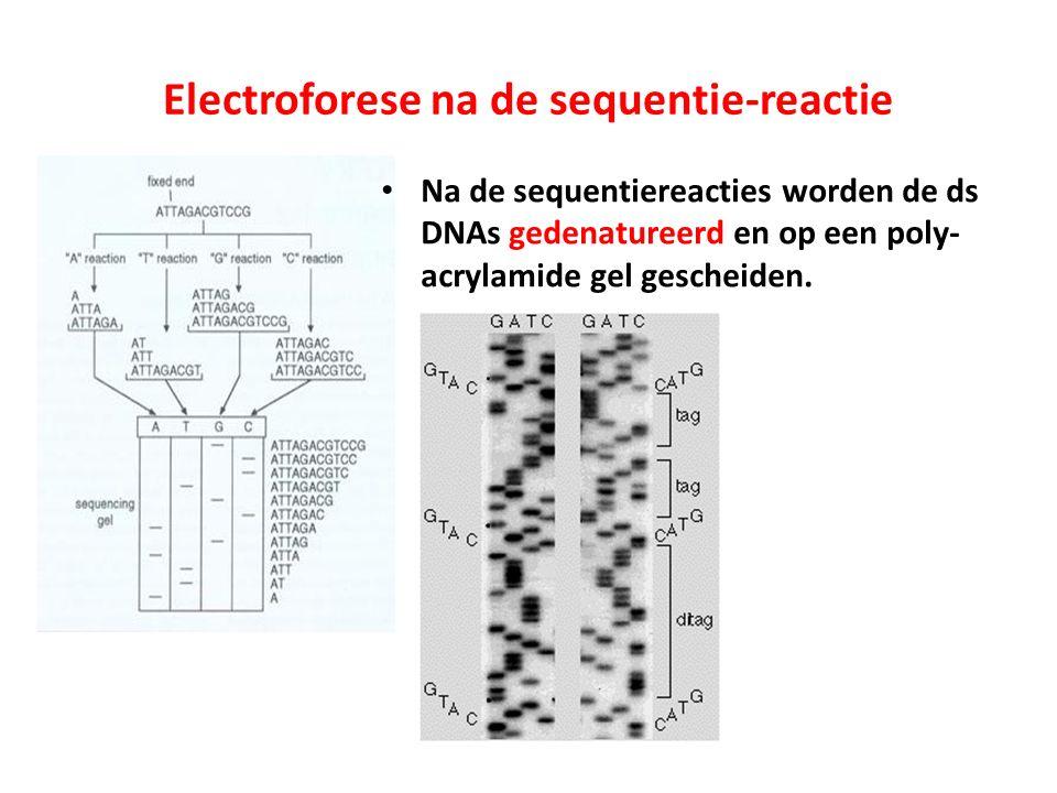 Electroforese na de sequentie-reactie