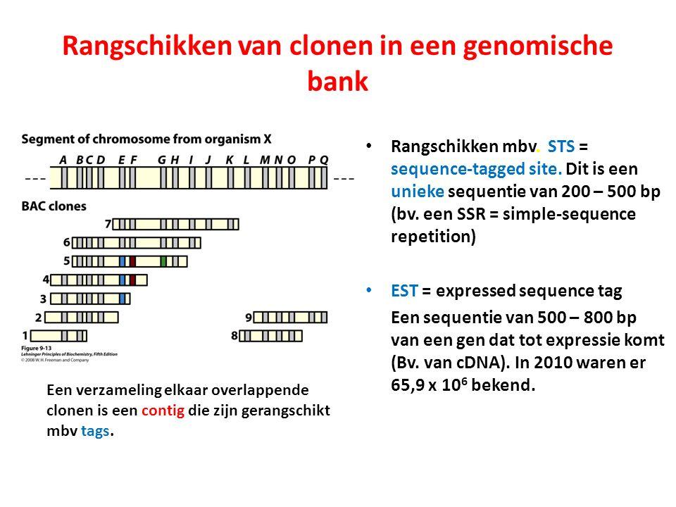 Rangschikken van clonen in een genomische bank