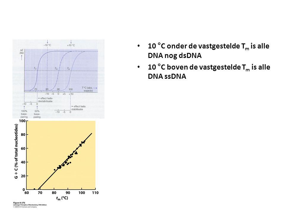 10 °C onder de vastgestelde Tm is alle DNA nog dsDNA