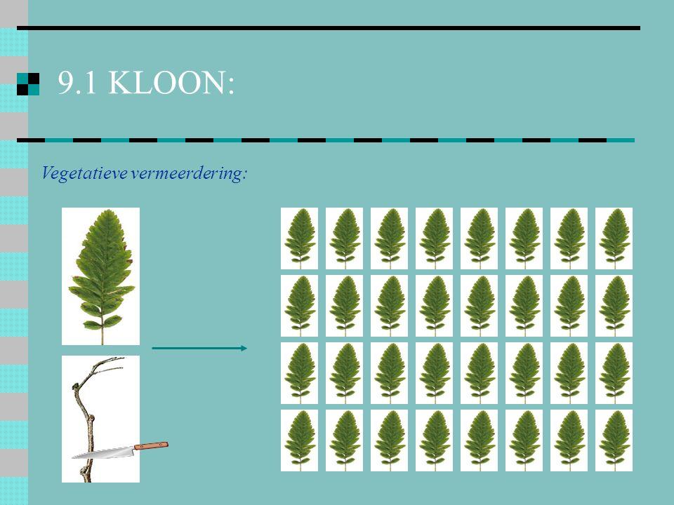 9.1 KLOON: Vegetatieve vermeerdering: