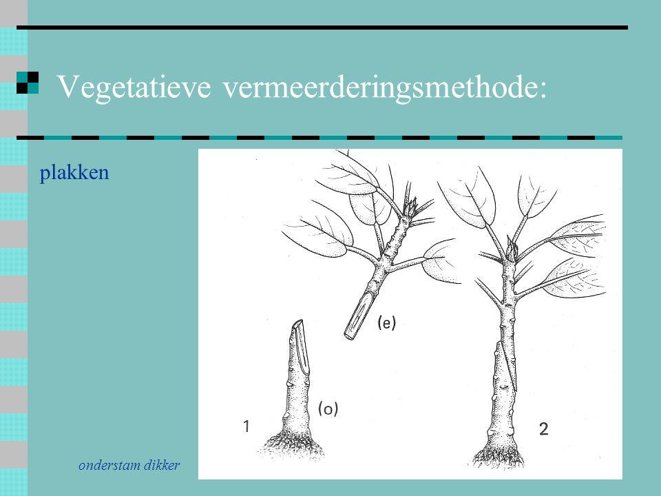 Vegetatieve vermeerderingsmethode: