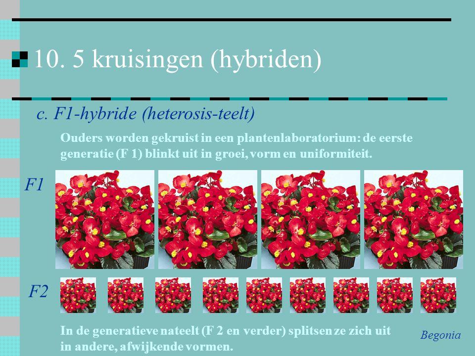10. 5 kruisingen (hybriden)