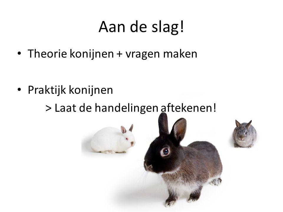 Aan de slag! Theorie konijnen + vragen maken Praktijk konijnen