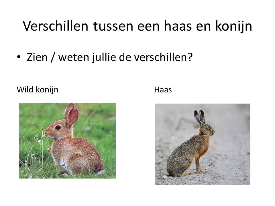 Verschillen tussen een haas en konijn