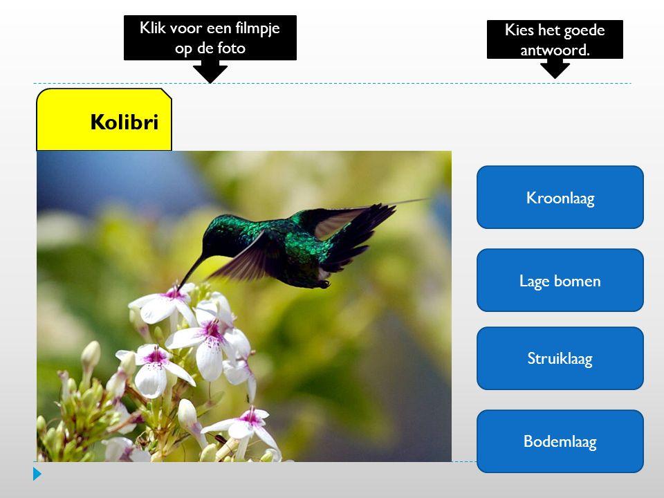 Kolibri Klik voor een filmpje op de foto Kies het goede antwoord.