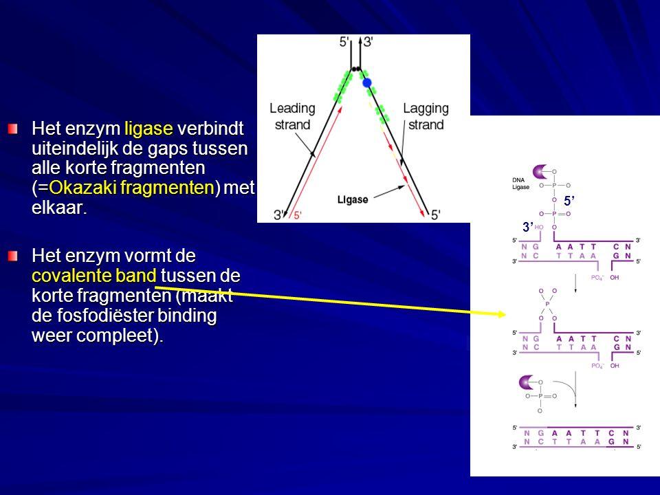 Het enzym ligase verbindt uiteindelijk de gaps tussen alle korte fragmenten (=Okazaki fragmenten) met elkaar.