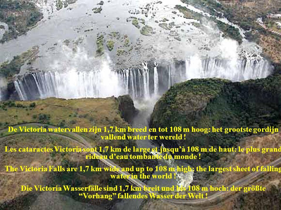 De Victoria watervallen zijn 1,7 km breed en tot 108 m hoog: het grootste gordijn vallend water ter wereld !