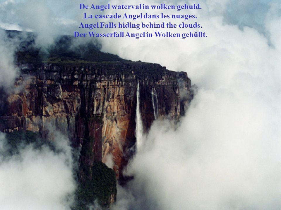 De Angel waterval in wolken gehuld. La cascade Angel dans les nuages.