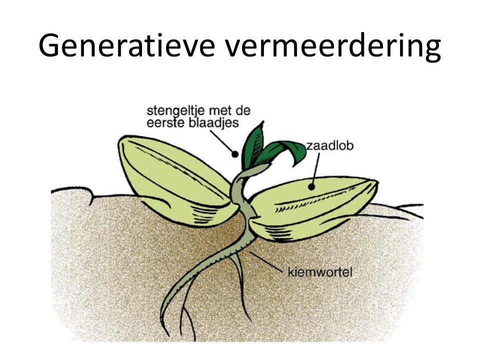 Generatieve vermeerdering