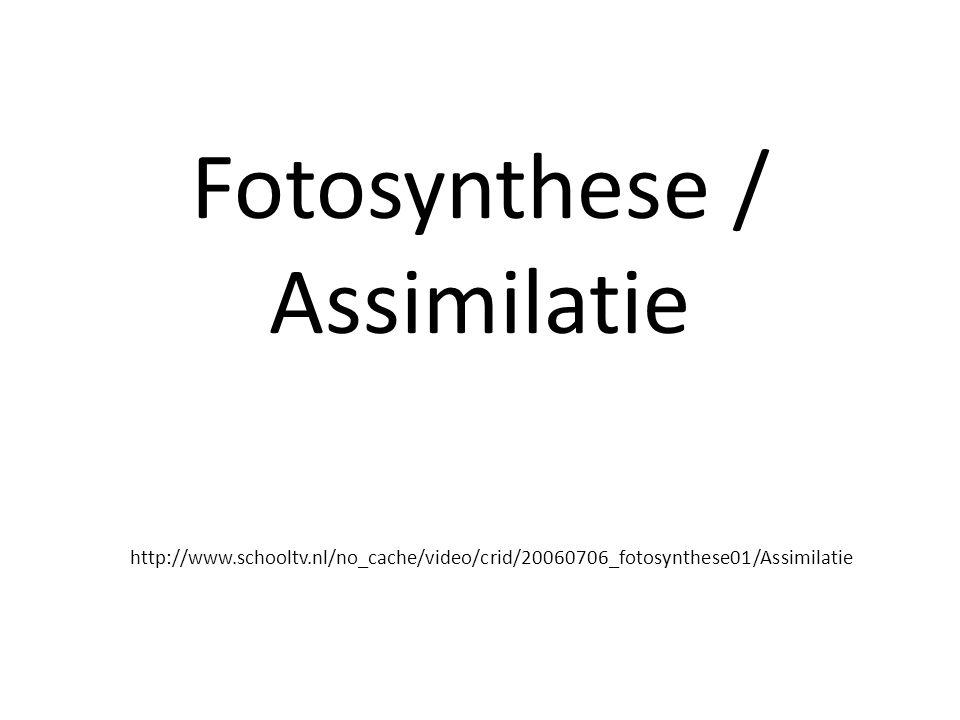 Fotosynthese / Assimilatie http://www. schooltv