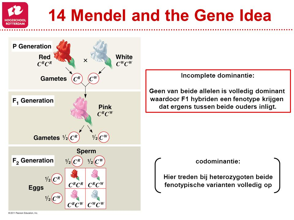 14 Mendel and the Gene Idea