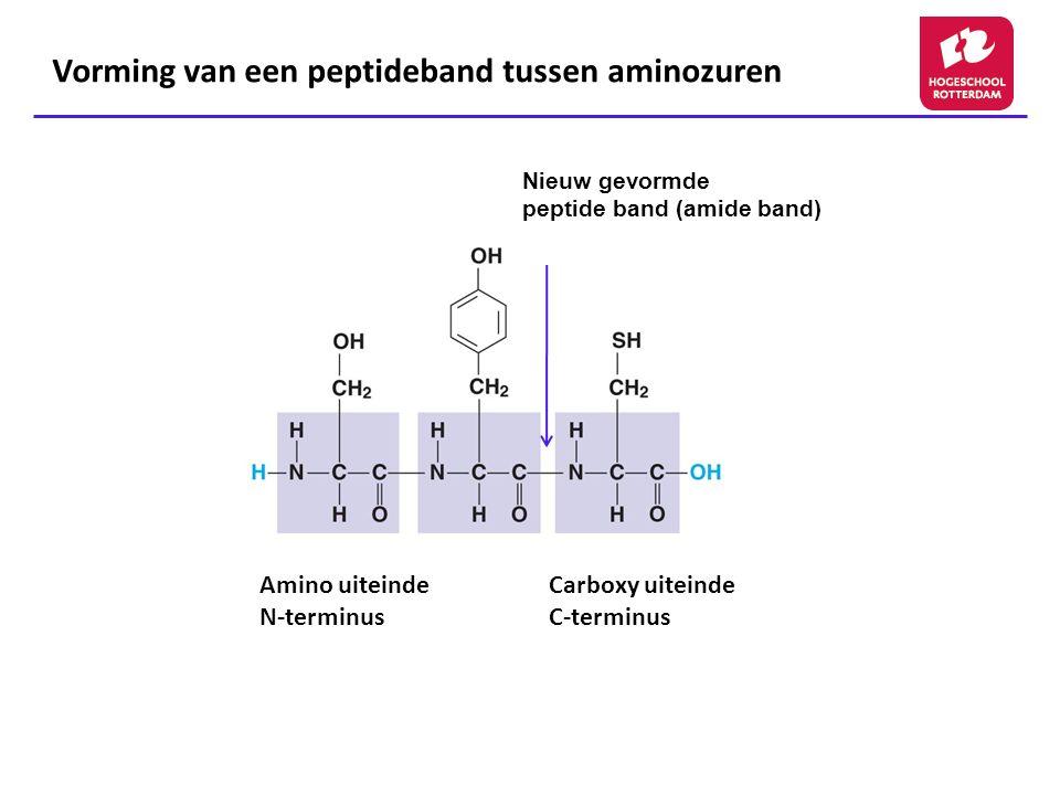 Vorming van een peptideband tussen aminozuren