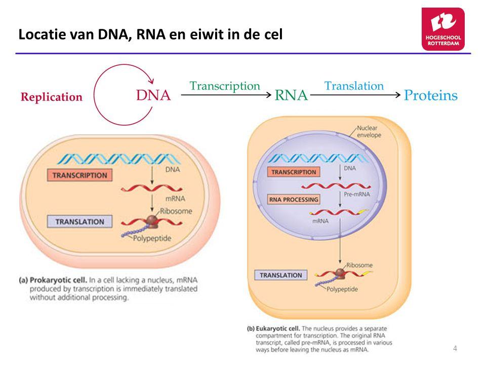 Locatie van DNA, RNA en eiwit in de cel