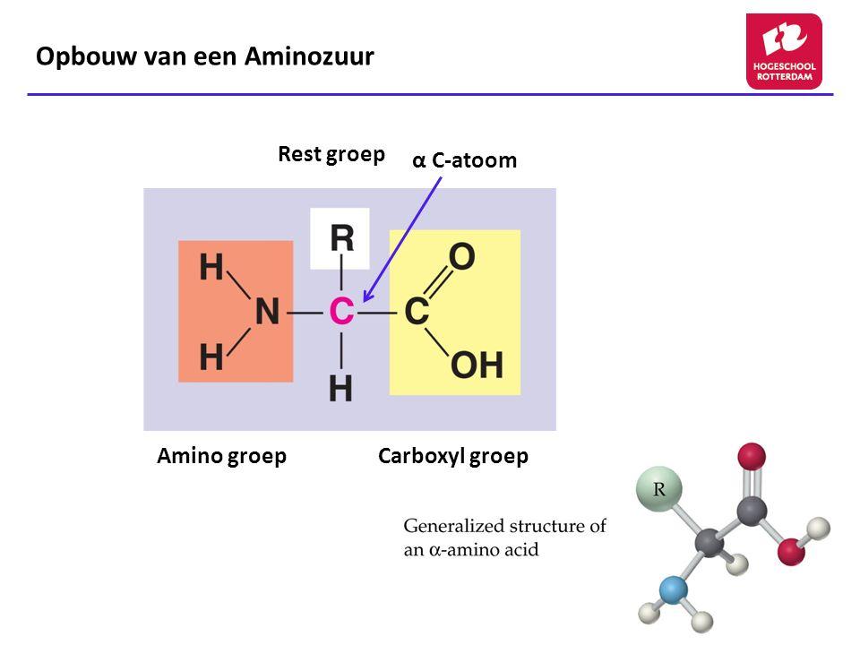 Opbouw van een Aminozuur