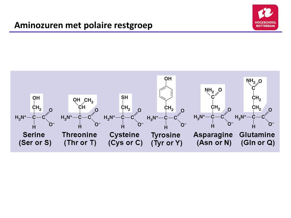 Aminozuren met polaire restgroep
