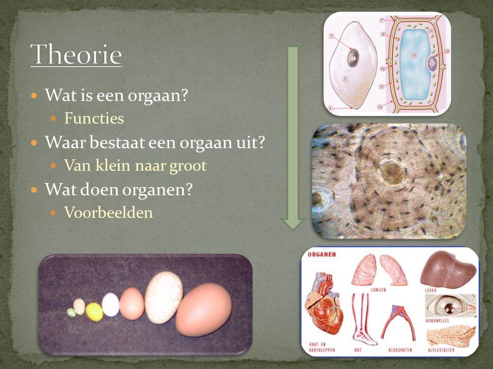 Theorie Wat is een orgaan Waar bestaat een orgaan uit