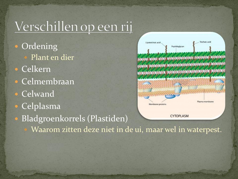 Verschillen op een rij Ordening Celkern Celmembraan Celwand Celplasma