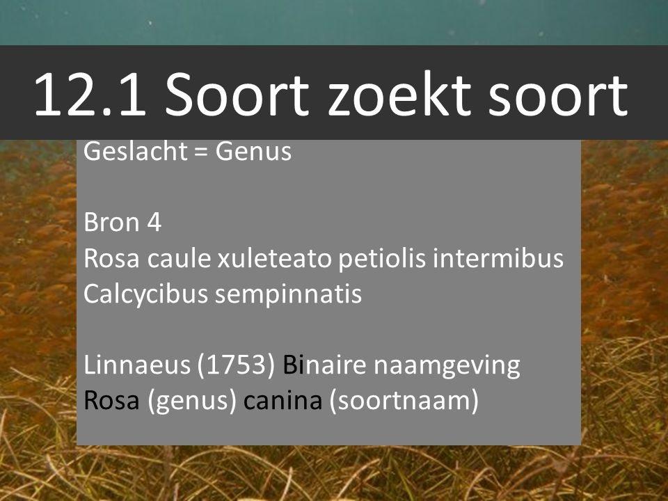 12.1 Soort zoekt soort Geslacht = Genus Bron 4