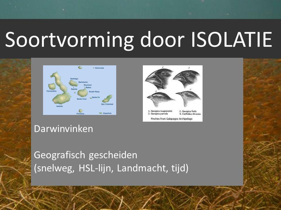 Soortvorming door ISOLATIE
