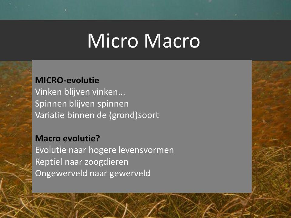 Micro Macro MICRO-evolutie Vinken blijven vinken...