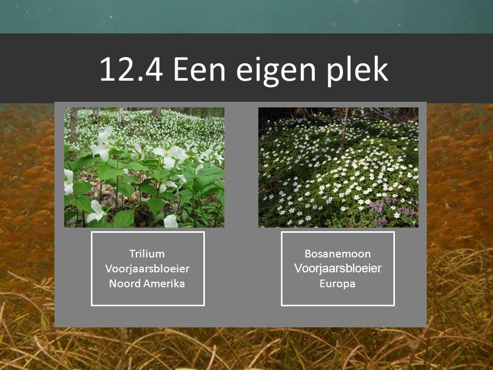 12.4 Een eigen plek Trilium Voorjaarsbloeier Noord Amerika Bosanemoon